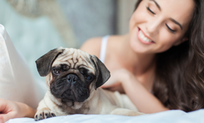 $80 for 1 Night of In-Home Pet Boarding and Dog Walking