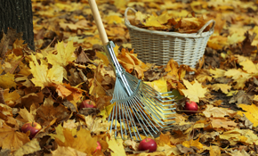 $179 for 4 Hours of Leaf Removal and Clean Up