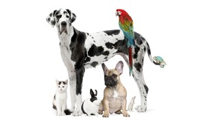 $25 for $40 worth of Pet Sitting and Dog Walking Services