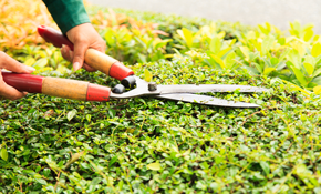 $239 for 4 Hours of Lawn or Landscape Work