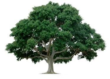 Elling Tree Farm logo