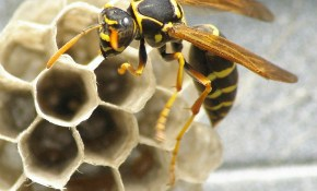 $189 for Wasp Treatment with 1-year Warranty (2 Story Home)