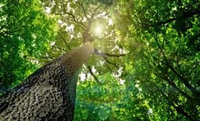$115 for Tree/Plant Deep-Root Fertilization Treatment
