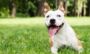 $75 for $100 Credit Toward Animal Training