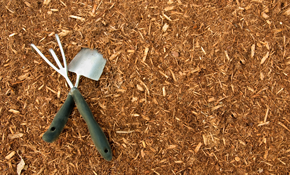 $800 for 10 Cubic Yards of Premium Mulch Delivered and Spread