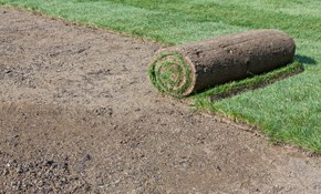 $950 for 1,000 Square Feet of Fresh Sod Installed