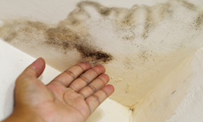 $49 for Mold Inspection and Evaluation