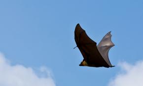 $167 for Bat Inspection