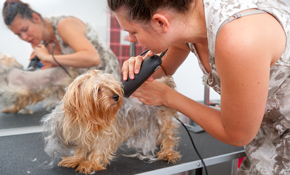 $80 for Hair and Nail Grooming Package