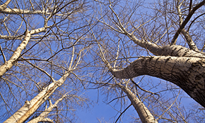 $1.299 for 3 Tree Service Professionals for a Half-Day