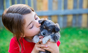 $90 for a Hidden Pet Fence Service Call
