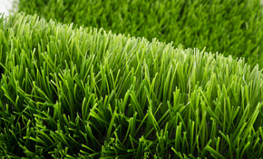 $59 Lawn Overseed