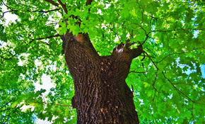 $350 for a Professional Tree Health and Risk Assesment