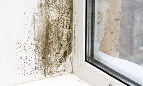 $375 for a Comprehensive Mold Inspection, Lab Report, and 3 Air Samples