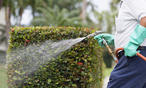 $329 for a Quarterly Pest Control Package