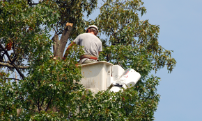 $2,299 for a Full Day Worth of Tree Service Including a Bucket Truck and Four Person Crew