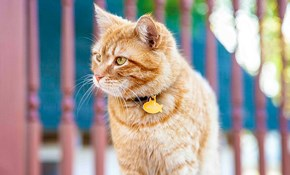 $59 for a Weekend of Cat Vacation/Business Travel Services