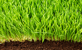 $109 Lawn Aeration and Lawn Analysis
