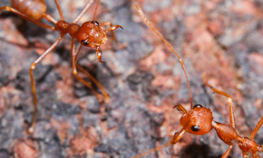 $495 for Year Round Ant Prevention Program--Warranty Included