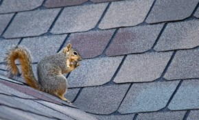 $695 for Squirrel Removal--1-Year Service Warranty Included