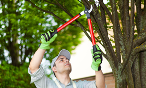 $450 for $500 of Tree Service