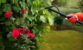 $149 for a Complete Horticultural Spraying and Fertilization of All Your Shrubs