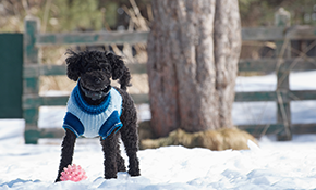 $1,100 for a Nearly Invisible, Non-Electric Pet Fence Installation