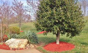 $95 Arborist Consult