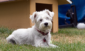 $450 for $500 Credit Toward a New Outdoor DogWatch Hidden Fence System