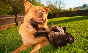 $160 for a Weekend of In-Home Pet Boarding and Dog Walking