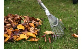 $349 for 8 Hours of Landscape/Yard Clean-Up Including Disposal!
