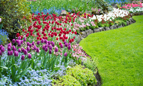 $1,440 Landscaping Package, Including Plants and Installation