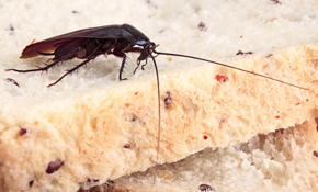 $145 for Roach Inspection and Treatment