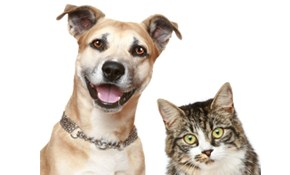 $200 for 10 Visits of Pet Sitting/Dog Walking Services