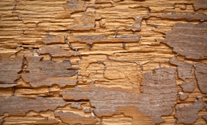 $895 for a Sentricon® Termite Treatment Package