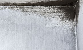 $49 for Mold Evaluation and Moisture Readings, No Mold Testing