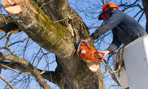 $1,400 for 3 Tree Service Professionals for 4 Hours--Includes a 70 Foot Lift