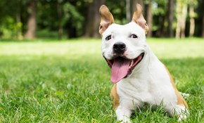 $100 for $120 of Pet Waste Removal Services