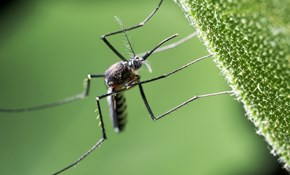 $239 for 5 Mosquito Treatments