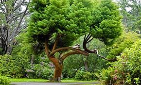 $150 for Trees Fertilization Treatment