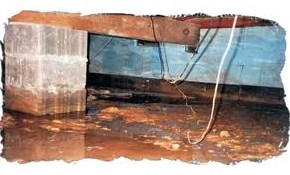 $270 for a Professional Foundation and Basement Water Leakage Inspection Including Drainage Assessment!