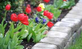 $360 for 8 Hours of Landscaping and a One-Hour Landscape Consultation