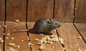 $225.99 for Interior/Exterior Pest & Rodent Control