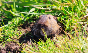$172.38 for Mole Inspection & Removal