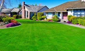 $250 for Lawn Aeration and Overseed