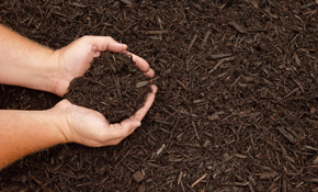 $599 for 600 Square Feet of Premium Mulch Delivered and Spread