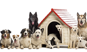 $182 for 1 Week of Dog Boarding Services