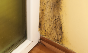 $198 for Comprehensive Mold or Water Inspection