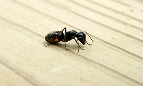 $85 for a 1-Time Pest Control Service