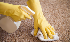$249 For 800 Square Feet Of Carpet Cleaning, Sanitizing And Spot Removal